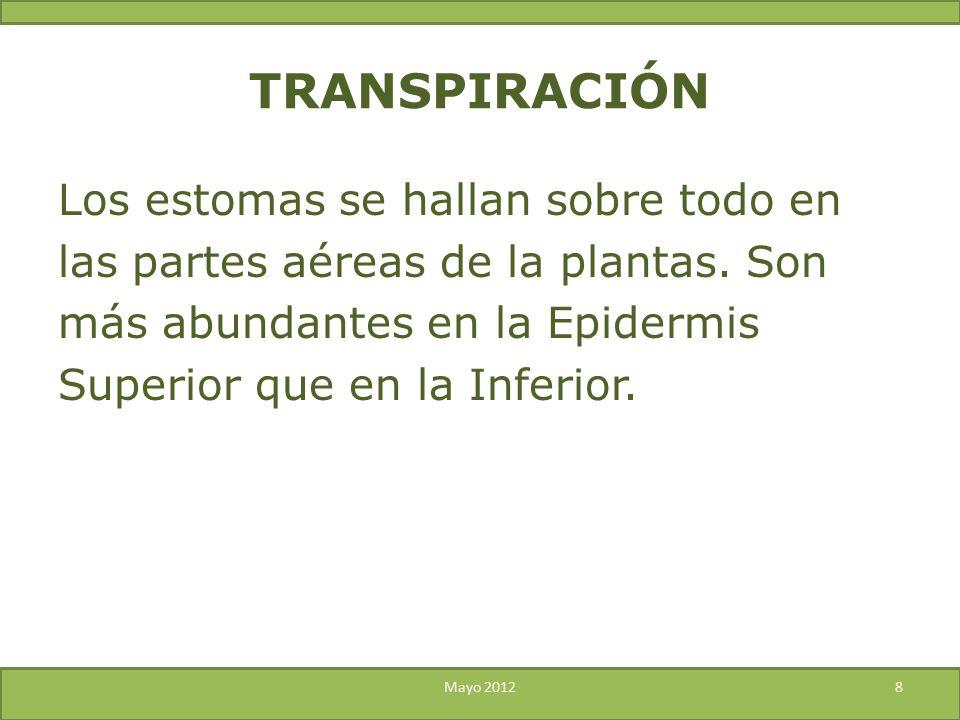 Los estomas se hallan sobre todo en las partes aéreas de la plantas. Son más abundantes en la Epidermis Superior que en la Inferior. Mayo 20128 TRANSP