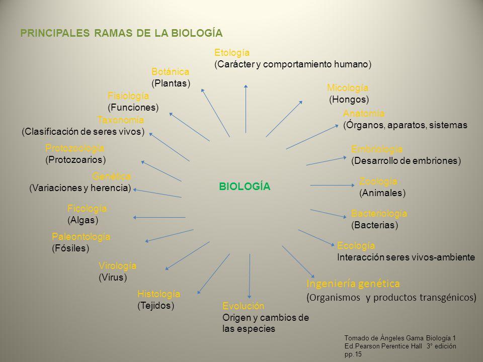 PRINCIPALES RAMAS DE LA BIOLOGÍA BIOLOGÍA Micología (Hongos) Embriología (Desarrollo de embriones) Zoología (Animales) Bacteriología (Bacterias) Ingen