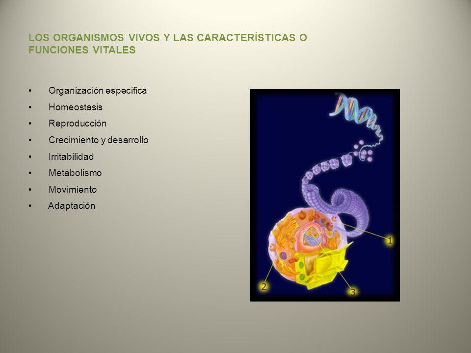 LOS ORGANISMOS VIVOS Y LAS CARACTERÍSTICAS O FUNCIONES VITALES Organización especifica Homeostasis Reproducción Crecimiento y desarrollo Irritabilidad
