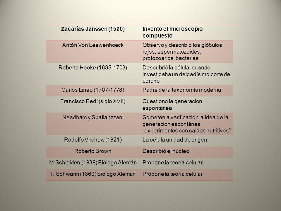 Zacarías Janssen (1590)Invento el microscopio compuesto Antón Von LeewenhoeckObservo y describió los glóbulos rojos, espermatozoides, protozoarios, ba