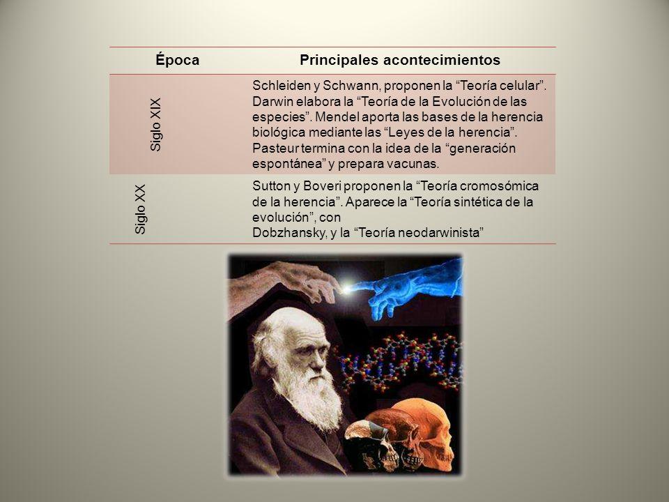 ÉpocaPrincipales acontecimientos Siglo XIX Schleiden y Schwann, proponen la Teoría celular. Darwin elabora la Teoría de la Evolución de las especies.