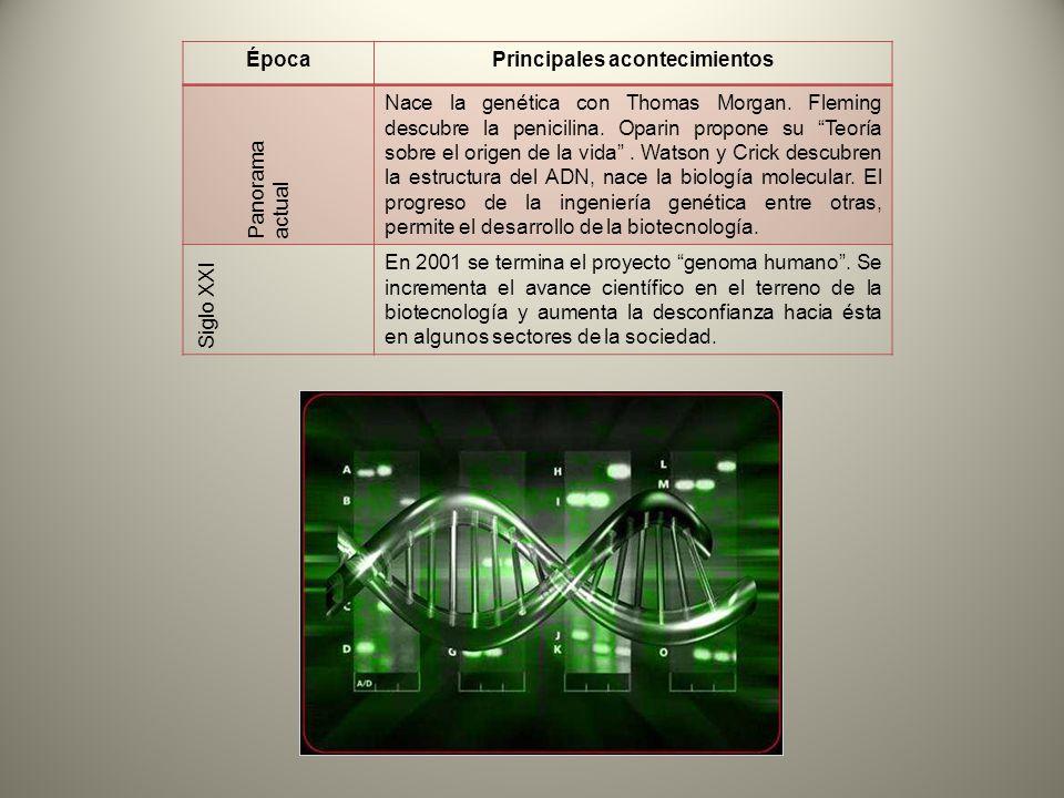 ÉpocaPrincipales acontecimientos Panorama actual Nace la genética con Thomas Morgan. Fleming descubre la penicilina. Oparin propone su Teoría sobre el