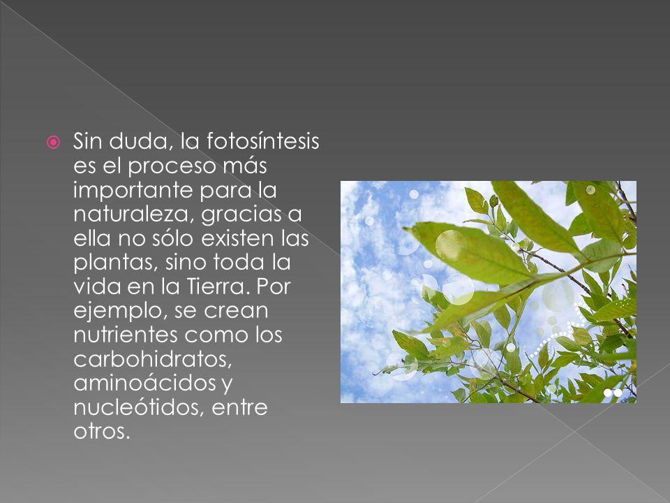 Sin duda, la fotosíntesis es el proceso más importante para la naturaleza, gracias a ella no sólo existen las plantas, sino toda la vida en la Tierra.