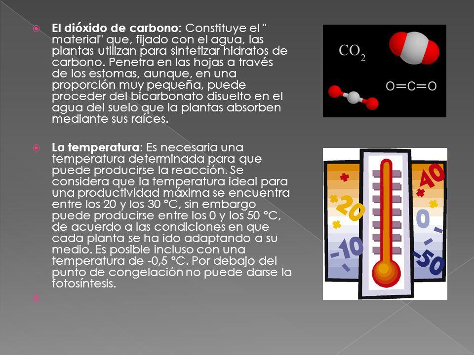 El dióxido de carbono : Constituye el material que, fijado con el agua, las plantas utilizan para sintetizar hidratos de carbono.