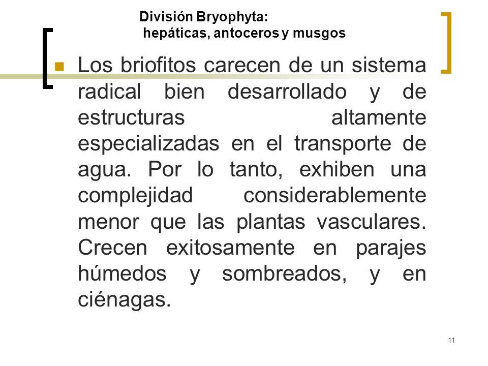 11 División Bryophyta: hepáticas, antoceros y musgos Los briofitos carecen de un sistema radical bien desarrollado y de estructuras altamente especial