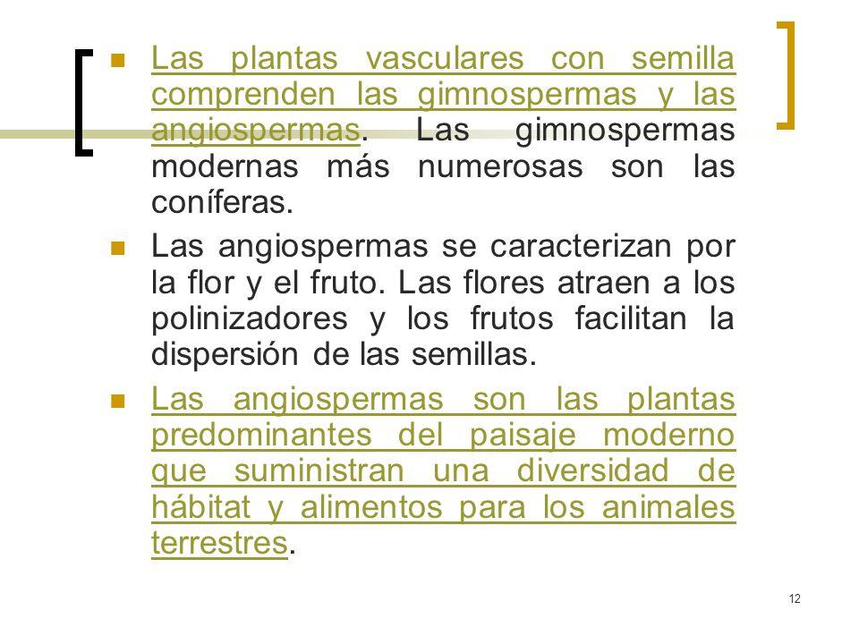 12 Las plantas vasculares con semilla comprenden las gimnospermas y las angiospermas. Las gimnospermas modernas más numerosas son las coníferas. Las p