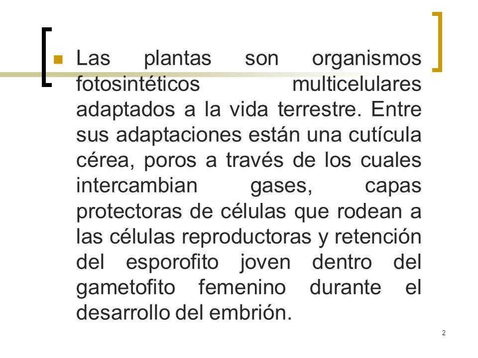 2 Las plantas son organismos fotosintéticos multicelulares adaptados a la vida terrestre. Entre sus adaptaciones están una cutícula cérea, poros a tra