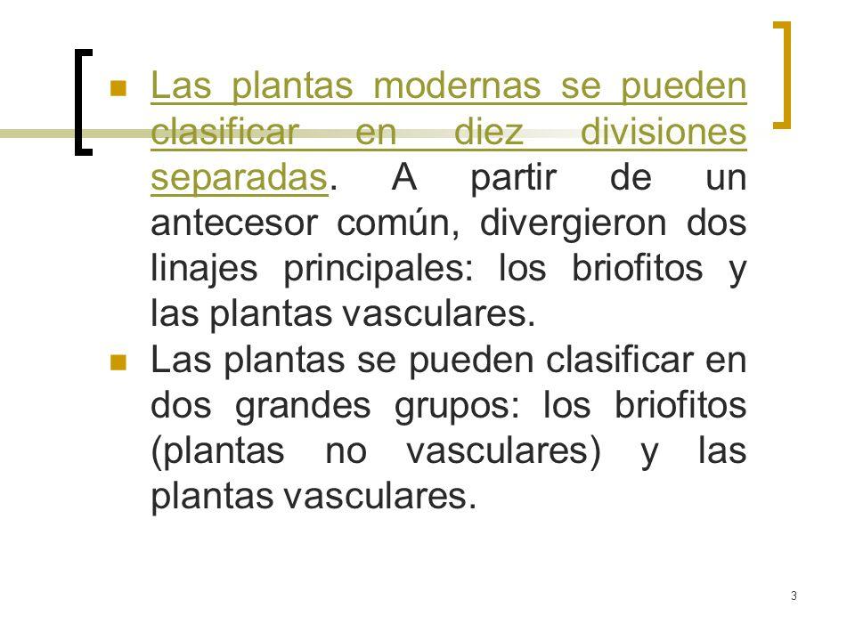 3 Las plantas modernas se pueden clasificar en diez divisiones separadas. A partir de un antecesor común, divergieron dos linajes principales: los bri