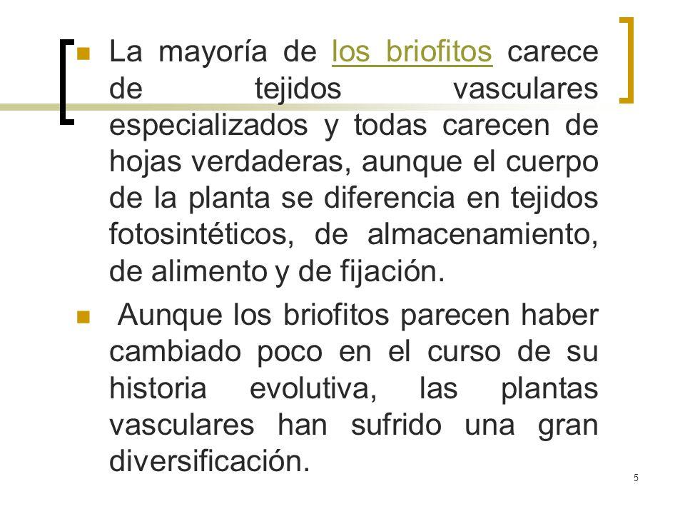 5 La mayoría de los briofitos carece de tejidos vasculares especializados y todas carecen de hojas verdaderas, aunque el cuerpo de la planta se difere