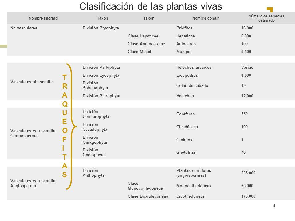 8 Clasificación de las plantas vivas Nombre informalTaxón Nombre común Número de especies estimado No vascularesDivisión Bryophyta Briófitos16.000 Cla