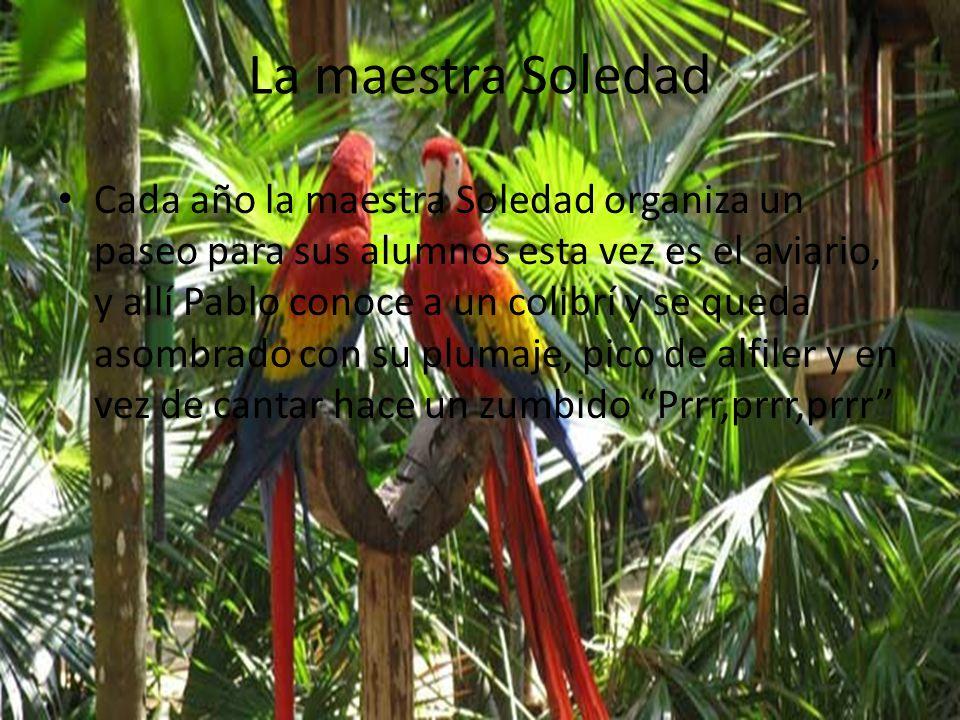La maestra Soledad Cada año la maestra Soledad organiza un paseo para sus alumnos esta vez es el aviario, y allí Pablo conoce a un colibrí y se queda asombrado con su plumaje, pico de alfiler y en vez de cantar hace un zumbido Prrr,prrr,prrr