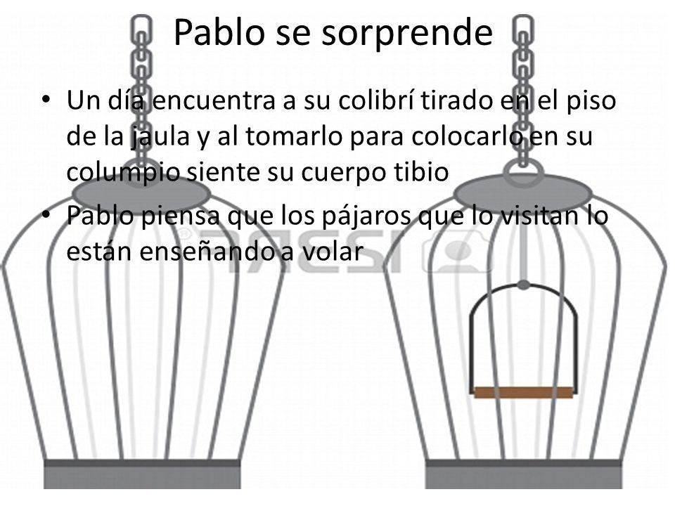Pablo se sorprende Un día encuentra a su colibrí tirado en el piso de la jaula y al tomarlo para colocarlo en su columpio siente su cuerpo tibio Pablo piensa que los pájaros que lo visitan lo están enseñando a volar