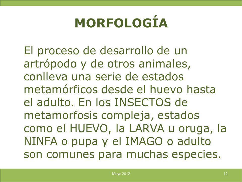 MORFOLOGÍA El proceso de desarrollo de un artrópodo y de otros animales, conlleva una serie de estados metamórficos desde el huevo hasta el adulto. En