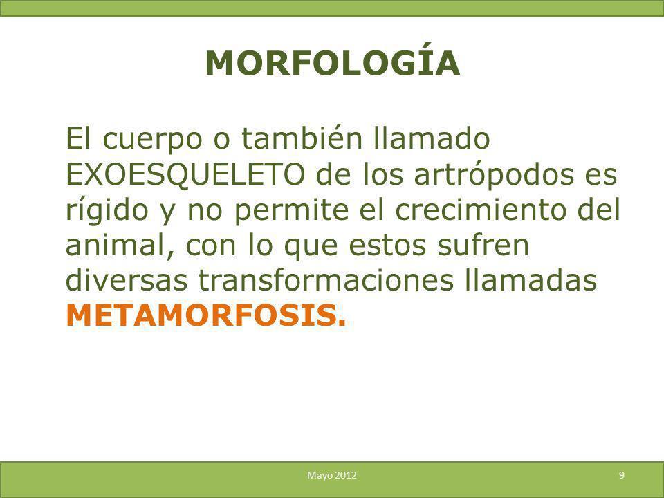 El cuerpo o también llamado EXOESQUELETO de los artrópodos es rígido y no permite el crecimiento del animal, con lo que estos sufren diversas transfor