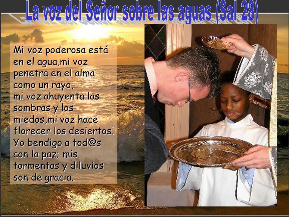 16 Nada más ser bautizado, Jesús salió del agua y, mientras salía, se abrieron los cielos y vio al Espíritu de Dios que bajaba como una paloma y desce