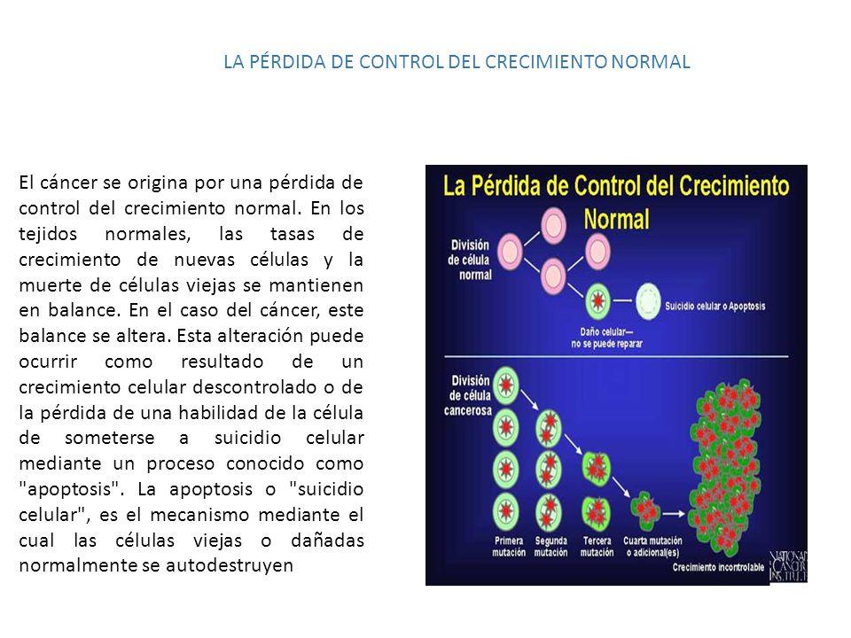 LA PÉRDIDA DE CONTROL DEL CRECIMIENTO NORMAL El cáncer se origina por una pérdida de control del crecimiento normal. En los tejidos normales, las tasa