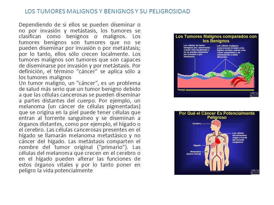 LOS TUMORES MALIGNOS Y BENIGNOS Y SU PELIGROSIDAD Dependiendo de si ellos se pueden diseminar o no por invasión y metástasis, los tumores se clasifica