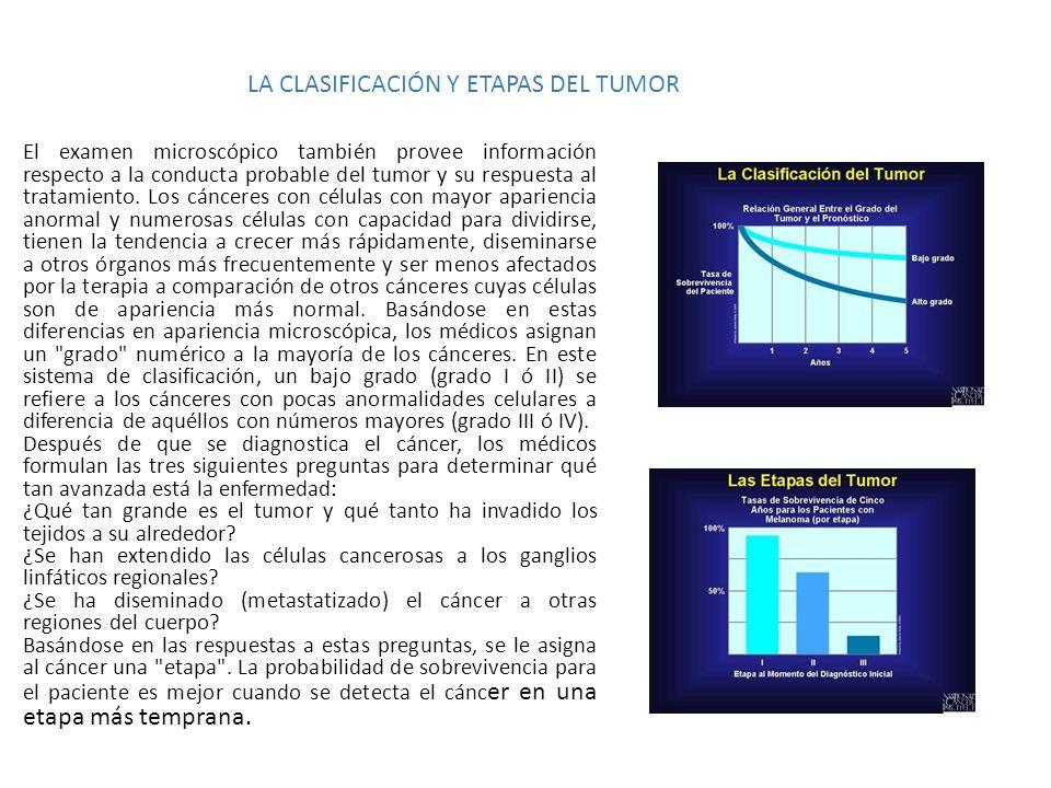 LA CLASIFICACIÓN Y ETAPAS DEL TUMOR El examen microscópico también provee información respecto a la conducta probable del tumor y su respuesta al trat