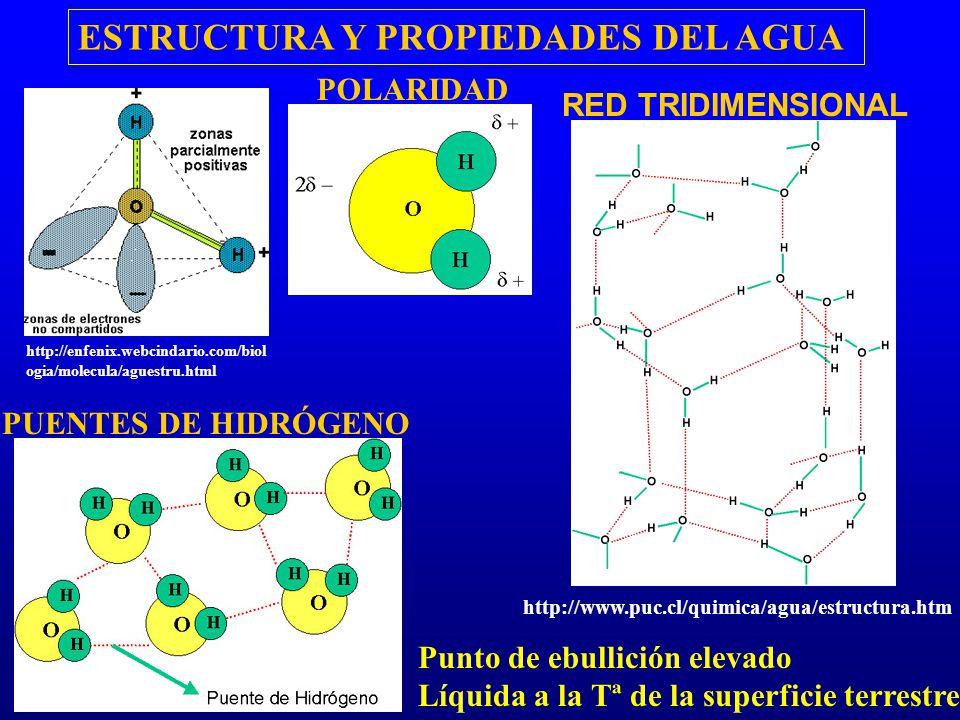 PUENTES DE HIDRÓGENO ESTRUCTURA Y PROPIEDADES DEL AGUA POLARIDAD Punto de ebullición elevado Líquida a la Tª de la superficie terrestre RED TRIDIMENSI