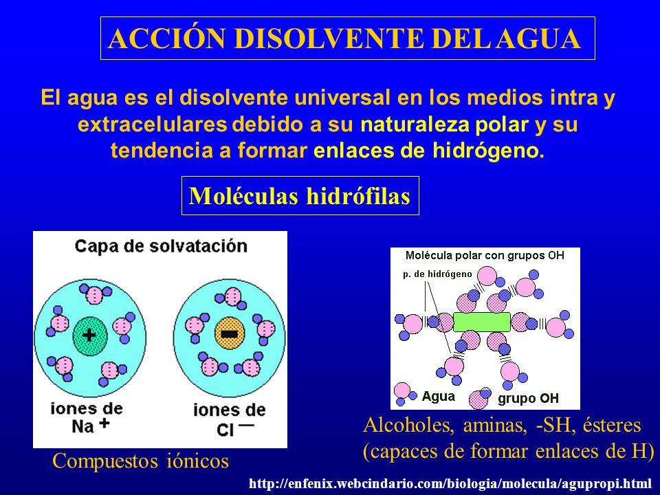 ACCIÓN DISOLVENTE DEL AGUA El agua es el disolvente universal en los medios intra y extracelulares debido a su naturaleza polar y su tendencia a forma