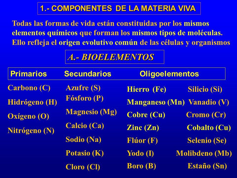 A.- BIOELEMENTOS Primarios Secundarios Oligoelementos Azufre (S) Fósforo (P) Magnesio (Mg) Calcio (Ca) Sodio (Na) Potasio (K) Cloro (Cl) Carbono (C) H