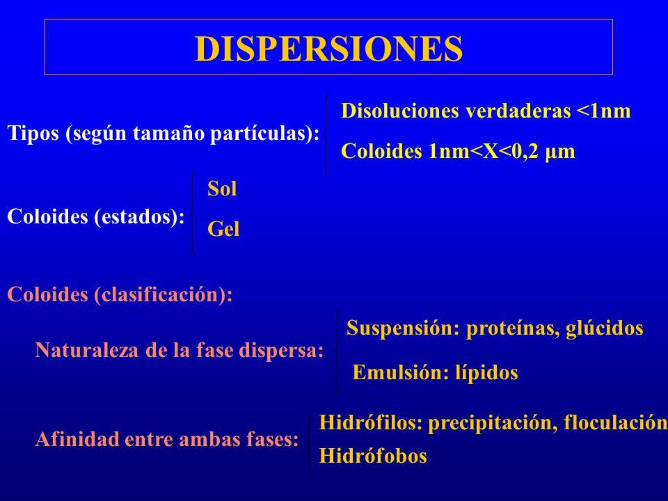 DISPERSIONES Naturaleza de la fase dispersa: Suspensión: proteínas, glúcidos Emulsión: lípidos Afinidad entre ambas fases: Hidrófilos: precipitación,