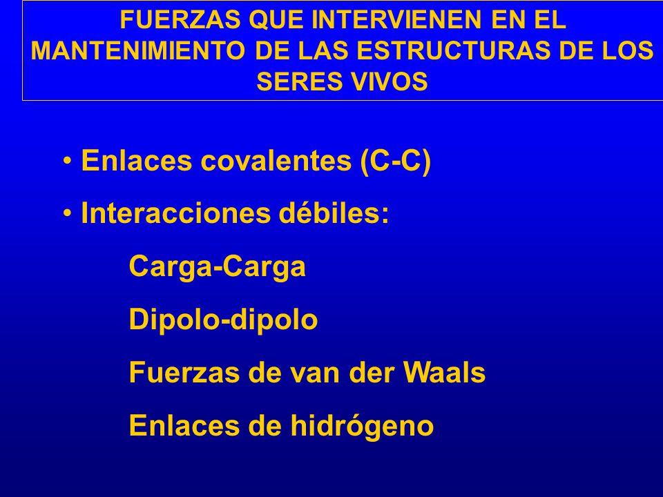 FUERZAS QUE INTERVIENEN EN EL MANTENIMIENTO DE LAS ESTRUCTURAS DE LOS SERES VIVOS Enlaces covalentes (C-C) Interacciones débiles: Carga-Carga Dipolo-d