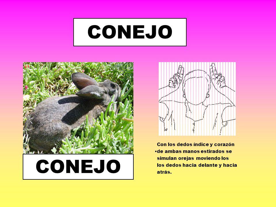 COCODRILO Manos con las palmas abiertas y unidas por las muñecas se cierran y abren como la boca de un cocodrilo.