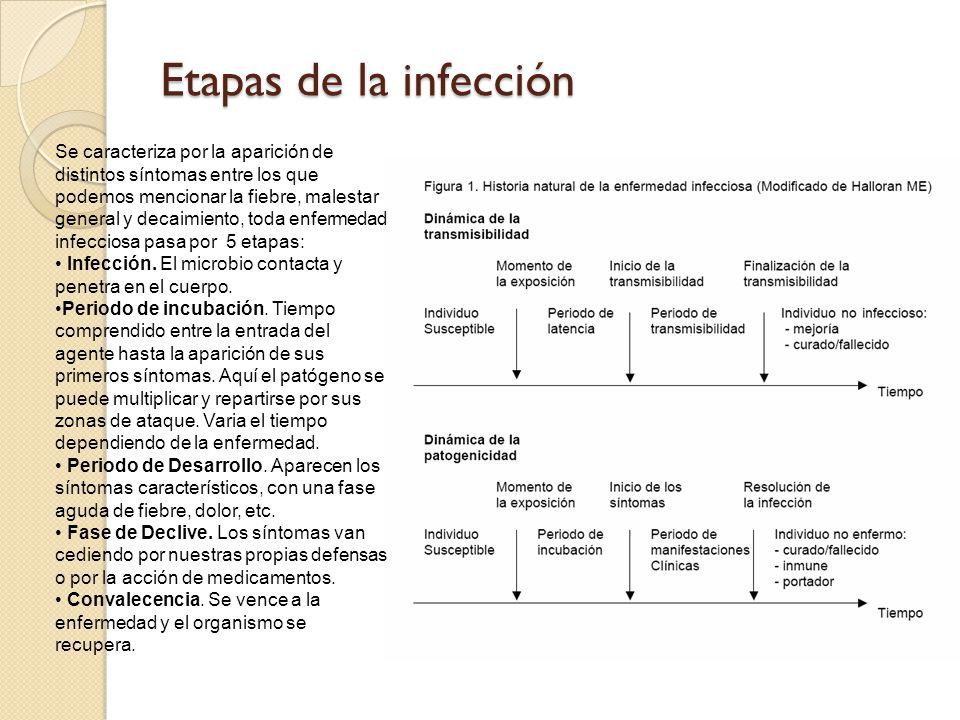 Etapas de la infección Se caracteriza por la aparición de distintos síntomas entre los que podemos mencionar la fiebre, malestar general y decaimiento