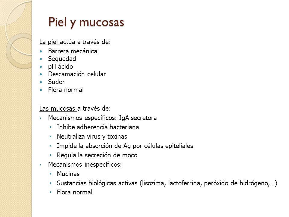 Piel y mucosas La piel actúa a través de: Barrera mecánica Sequedad pH ácido Descamación celular Sudor Flora normal Las mucosas a través de: Mecanismo