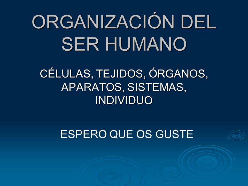 ORGANIZACIÓN DEL SER HUMANO CÉLULAS, TEJIDOS, ÓRGANOS, APARATOS, SISTEMAS, INDIVIDUO ESPERO QUE OS GUSTE