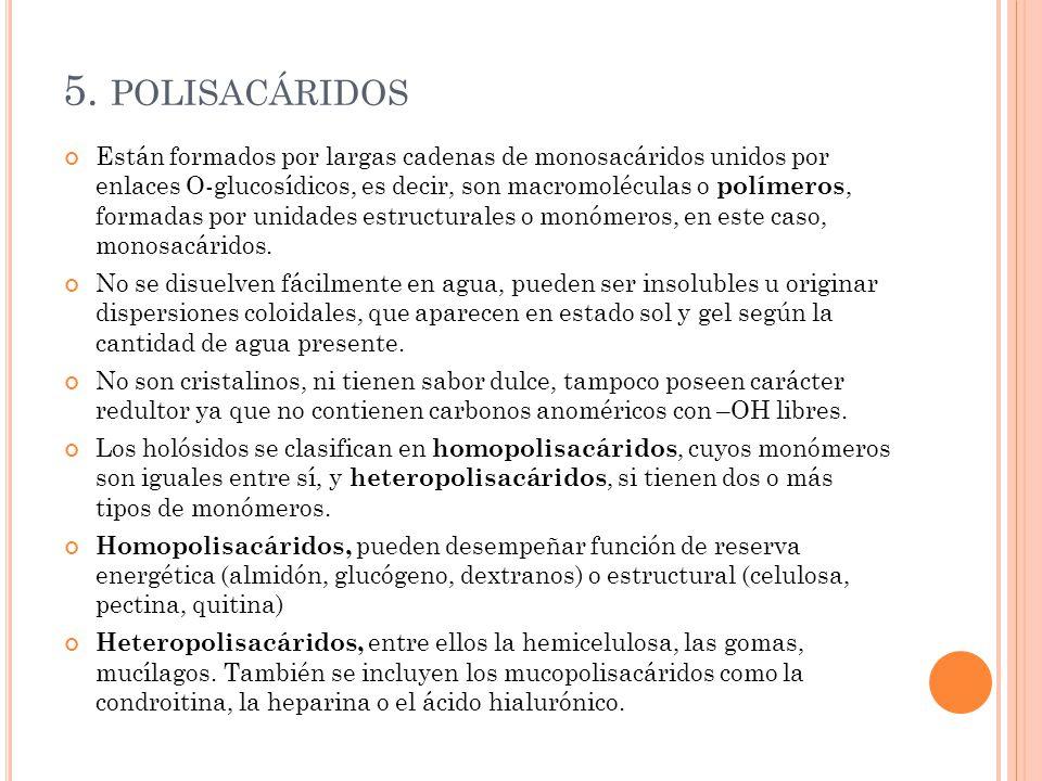 5.1 HOMOPOLISACÁRIDOS Homopolisacáridos de reserva.