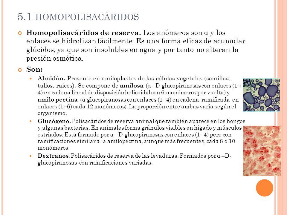 Homopolisacáridos estructurales.