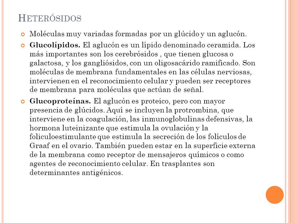 H ETERÓSIDOS Moléculas muy variadas formadas por un glúcido y un aglucón. Glucolípidos. El aglucón es un lípido denominado ceramida. Los más important