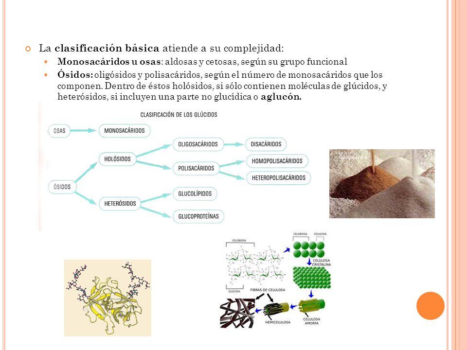 La clasificación básica atiende a su complejidad: Monosacáridos u osas : aldosas y cetosas, según su grupo funcional Ósidos: oligósidos y polisacárido