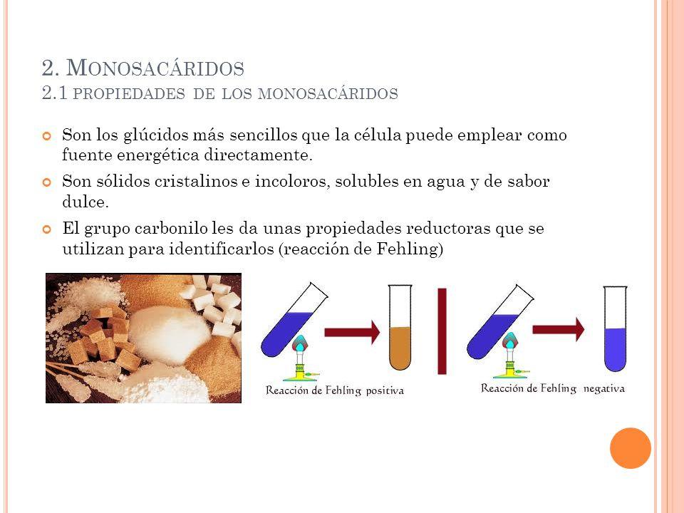 2. M ONOSACÁRIDOS 2.1 PROPIEDADES DE LOS MONOSACÁRIDOS Son los glúcidos más sencillos que la célula puede emplear como fuente energética directamente.