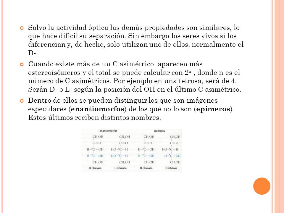 2.3 CLASIFICACIÓN DE LOS MONOSACÁRIDOS Se clasifican atendiendo al número de C de la molécula en triosas (3C), tetrosas (4C), pentosas (5C), hexosas (6C), etc.