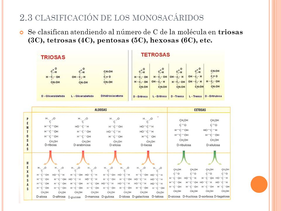 2.3 CLASIFICACIÓN DE LOS MONOSACÁRIDOS Se clasifican atendiendo al número de C de la molécula en triosas (3C), tetrosas (4C), pentosas (5C), hexosas (