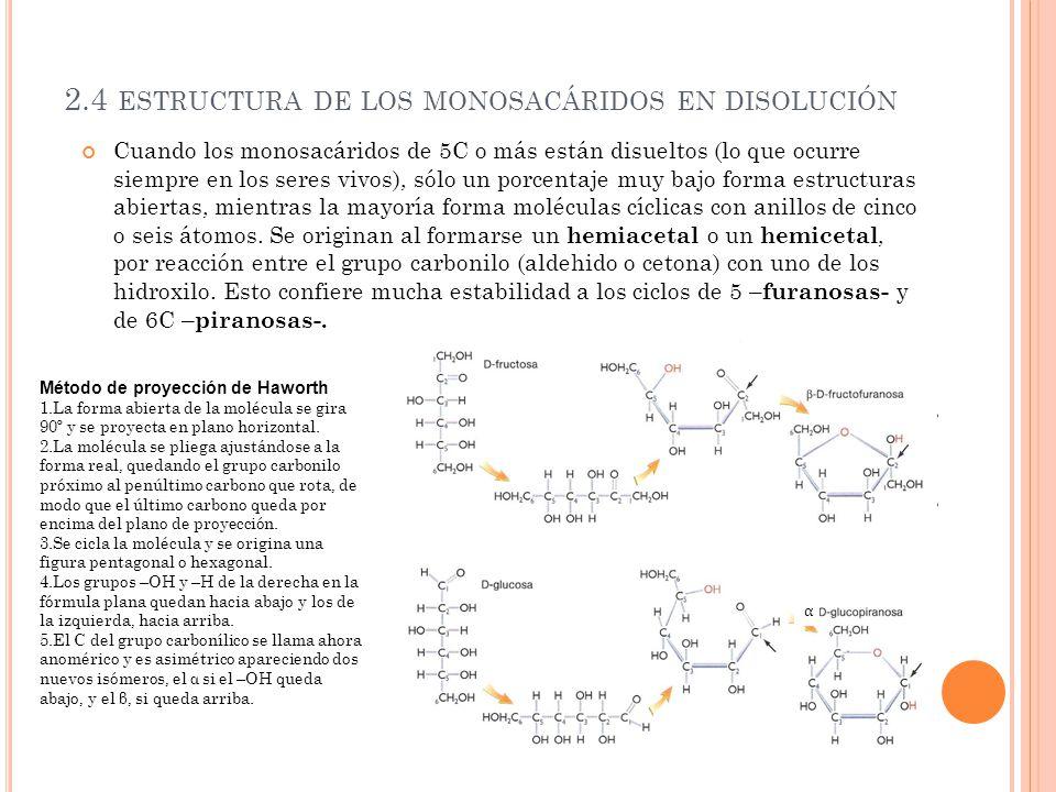 2.4 ESTRUCTURA DE LOS MONOSACÁRIDOS EN DISOLUCIÓN Cuando los monosacáridos de 5C o más están disueltos (lo que ocurre siempre en los seres vivos), sól