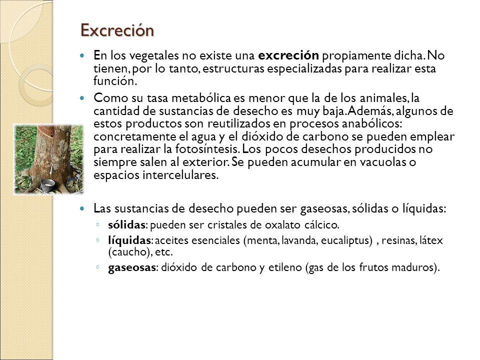 Excreción En los vegetales no existe una excreción propiamente dicha. No tienen, por lo tanto, estructuras especializadas para realizar esta función.