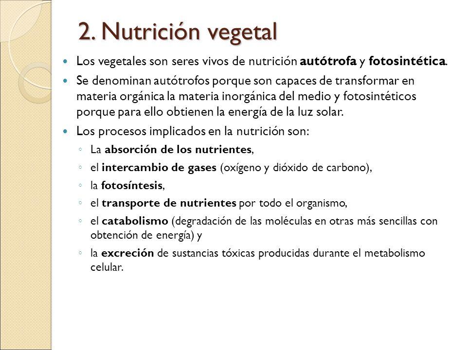 2. Nutrición vegetal Los vegetales son seres vivos de nutrición autótrofa y fotosintética. Se denominan autótrofos porque son capaces de transformar e