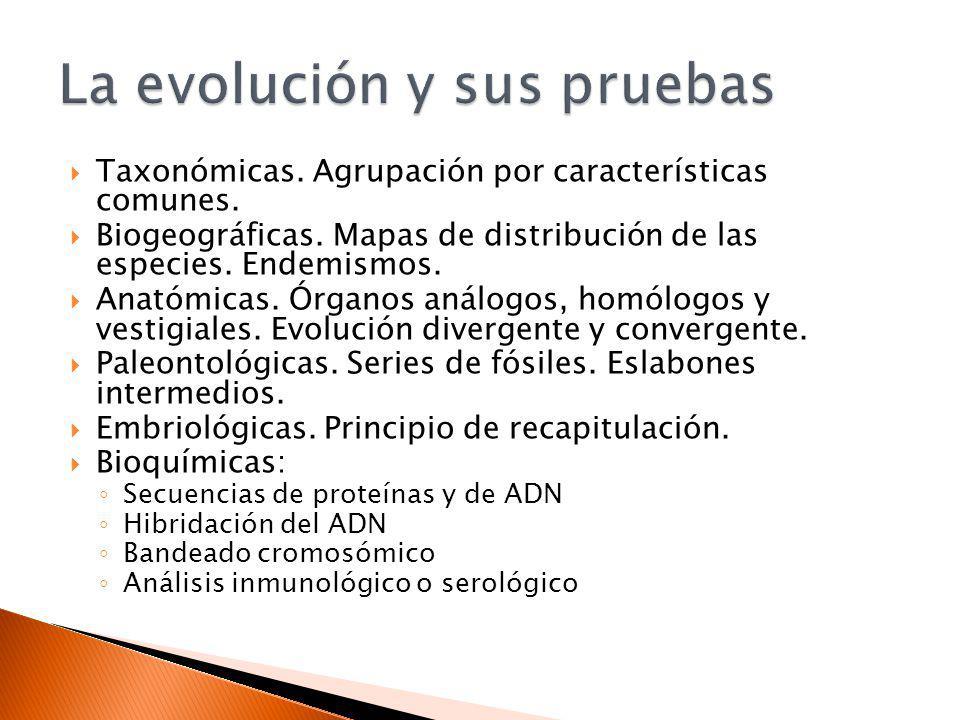 Taxonómicas. Agrupación por características comunes. Biogeográficas. Mapas de distribución de las especies. Endemismos. Anatómicas. Órganos análogos,