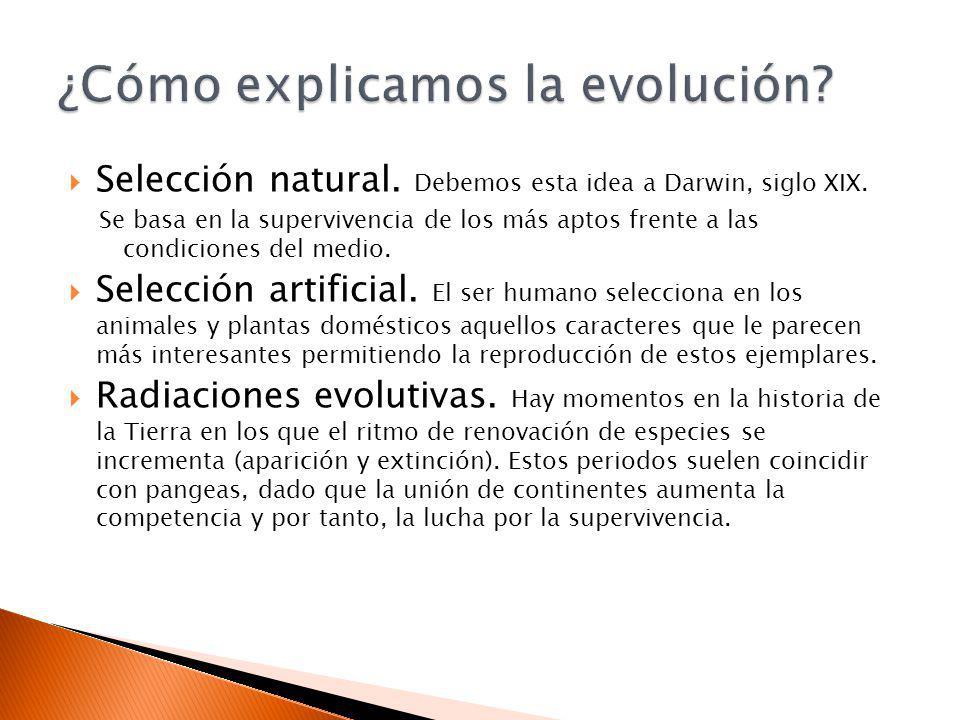 Selección natural. Debemos esta idea a Darwin, siglo XIX. Se basa en la supervivencia de los más aptos frente a las condiciones del medio. Selección a