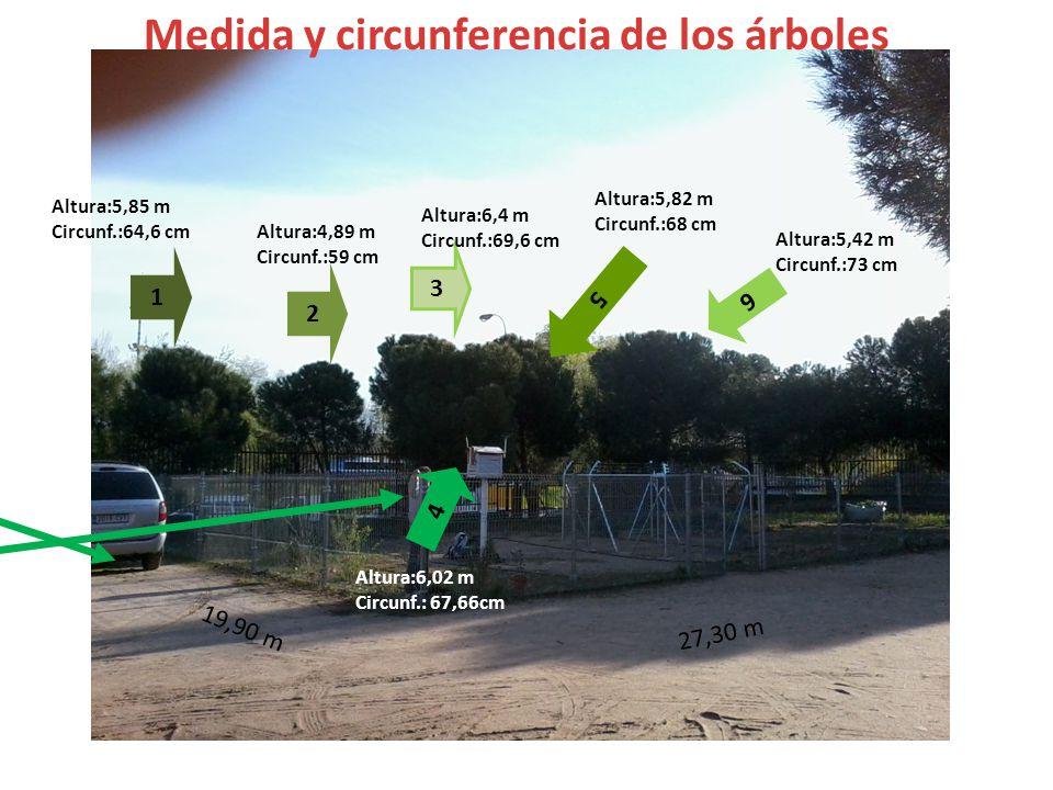 2 3 4 5 6 1 Altura:5,85 m Circunf.:64,6 cm Altura:4,89 m Circunf.:59 cm Altura:6,4 m Circunf.:69,6 cm Altura:6,02 m Circunf.: 67,66cm Altura:5,82 m Circunf.:68 cm Altura:5,42 m Circunf.:73 cm Medida y circunferencia de los árboles 19,90 m 27,30 m