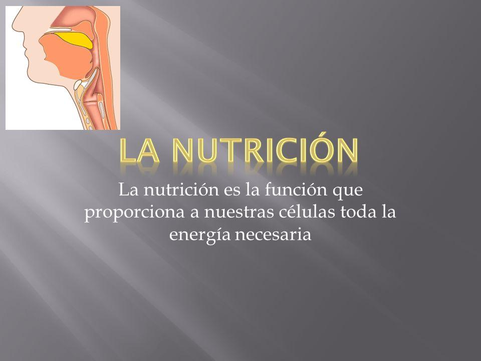 La nutrición es la función que proporciona a nuestras células toda la energía necesaria