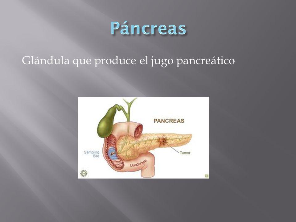 Glándula que produce el jugo pancreático