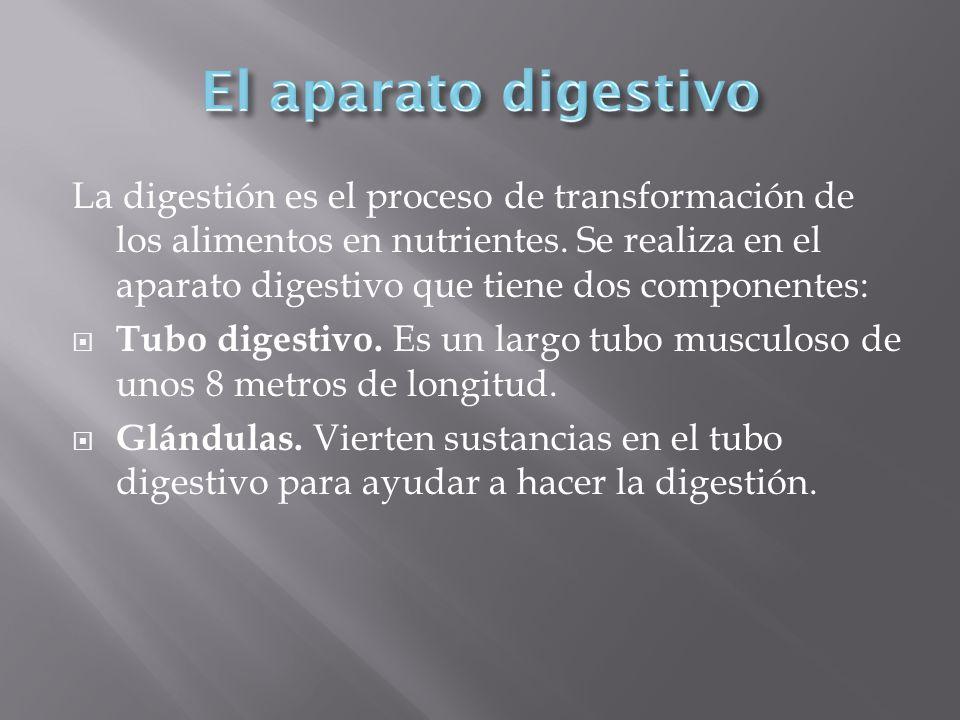 La digestión es el proceso de transformación de los alimentos en nutrientes. Se realiza en el aparato digestivo que tiene dos componentes: Tubo digest