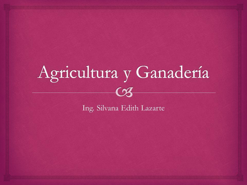 Ing. Silvana Edith Lazarte