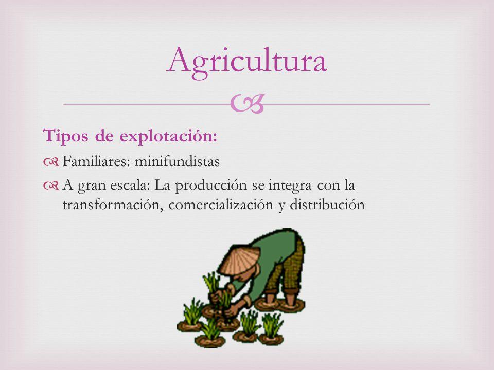 Tipos de explotación: Familiares: minifundistas A gran escala: La producción se integra con la transformación, comercialización y distribución Agricultura