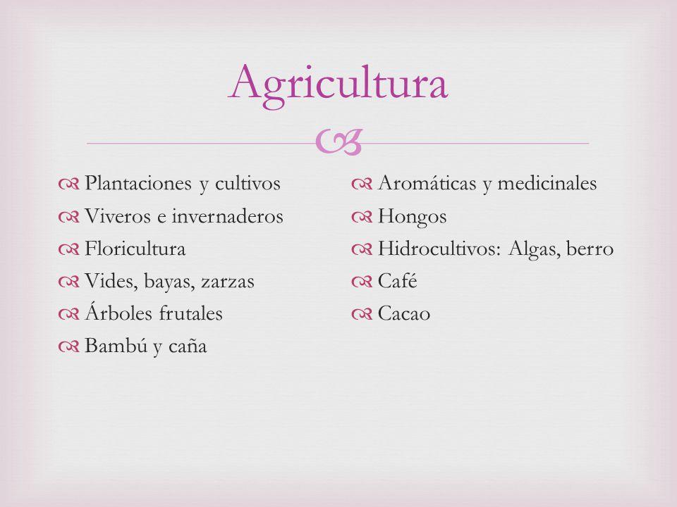 Agricultura Plantaciones y cultivos Viveros e invernaderos Floricultura Vides, bayas, zarzas Árboles frutales Bambú y caña Aromáticas y medicinales Hongos Hidrocultivos: Algas, berro Café Cacao